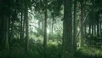 TLOU2 - Reveal trailer opening shot