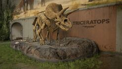Triceratops Wynnie