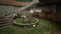 Ankylosaurus and Dilophosaurus
