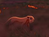 Первая охота Киары