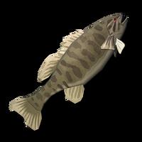 Smallmouth Bass (Raw).png