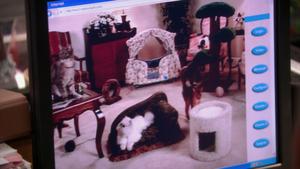 Cat nanny cam.png
