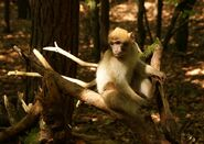 Affe allein 1