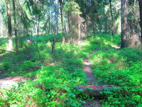 Naturschutzgebiet Wald.jpg