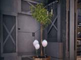 Puffball plant