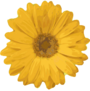 Flower clipart.png
