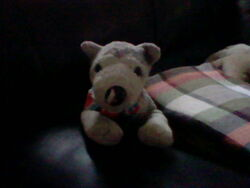 Di'angelo Sitting on the Sofa.JPG