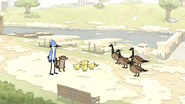 S4E19.58 Baby Ducks Confronting the Geese