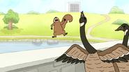 S4E19.12 A Goose Attacking a Squirrel