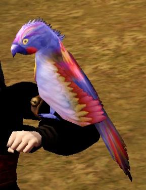 Spix Macaw.jpg
