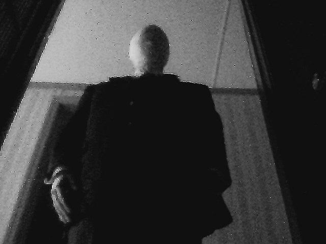 SlenderShadow.jpeg