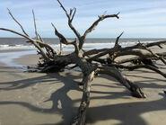 TWD-Oceanside-shore