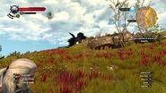 The Witcher 3- Wild Hunt - MATANDO UM ARQUIGRIFO SEM PERDER SANGUE !