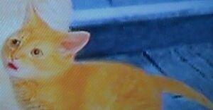 Catbaby.jpg