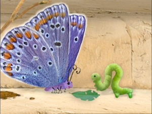 Butterfly and Inchworm.png