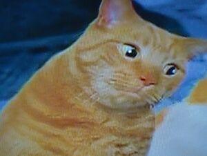Catdad.jpg