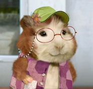 Winnie the Guinea Pig