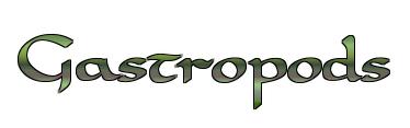 Gastropods.png