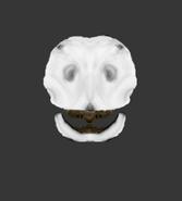 Skull of adult female Kuagu