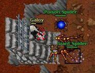 Ghostlands Giant Spider 2