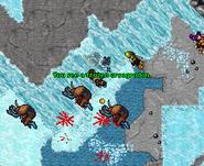 Chyllfroest Ursagrodon
