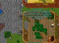 Druid guild