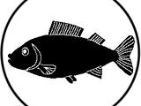 Knochenfische