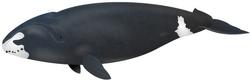 Grönlandwal.png