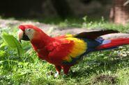 Parrot-1051339