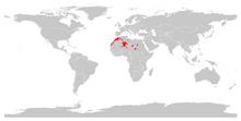 Mähnenspringer (Ammotragus lervia)-0.png