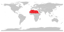 Dorkasgazelle (Gazella dorcas)-0.png