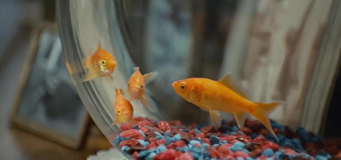 Rose's Pet Fish