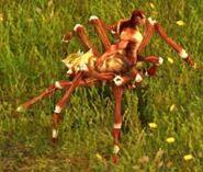 ArachnosRunenweber