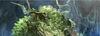 Jadegrove