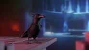 Crow in Enclave03