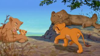 Simba podchodzi do lwic