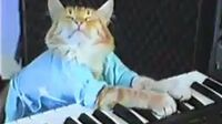 Charlie_Schmidt's_Keyboard_Cat