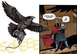 Koya falcon