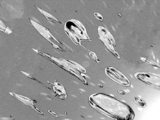 Cellule Rc