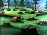 Big Feet - chopped trees