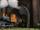 Тоннель Туманного острова