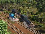 Эвкалиптовая плантация