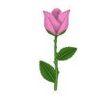 Tinted Rose.png