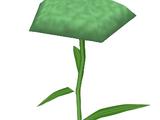 Model Carnation