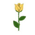 Corn Rose.png