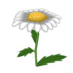 Midsummer Daisy.png