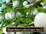 Manzana Blanca