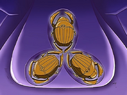 Scarabs of Isis