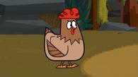 Poszukjąca prawdy kura
