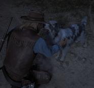 Arizona Kid dog